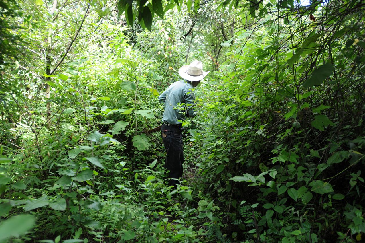 Lorenzo Arana busca los árboles que sembró.