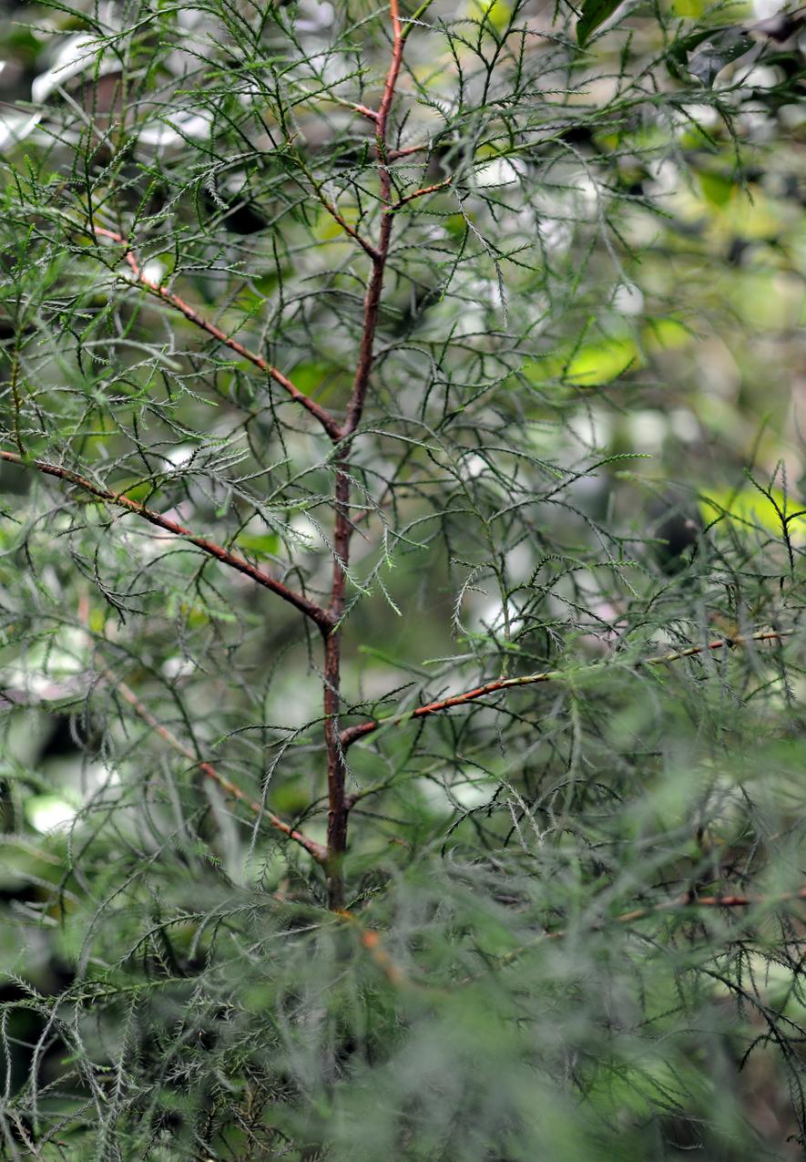 Uno de los dos únicos árboles que sobrevivieron pese a no recibir mantenimiento.