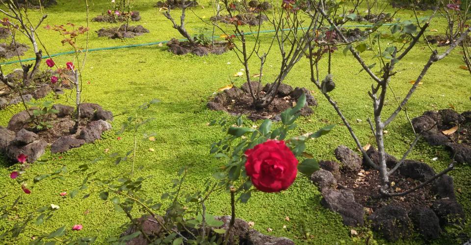 El jardín en donde fueron asesinados