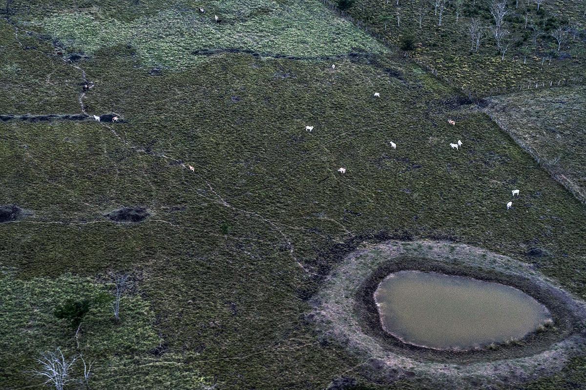 En el Parque Nacional Laguna del Tigre, las vacas disponen de más territorio que las personas