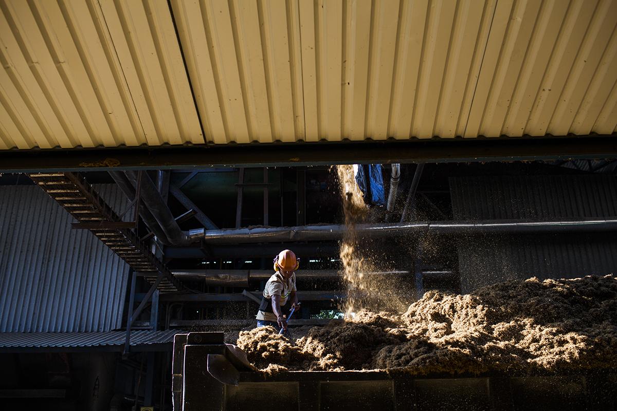 En la planta de procesamiento de la empresa Repsa, un empleado distribuye los desechos de los racimos de la palma en un camión de carga. Mayo 2017