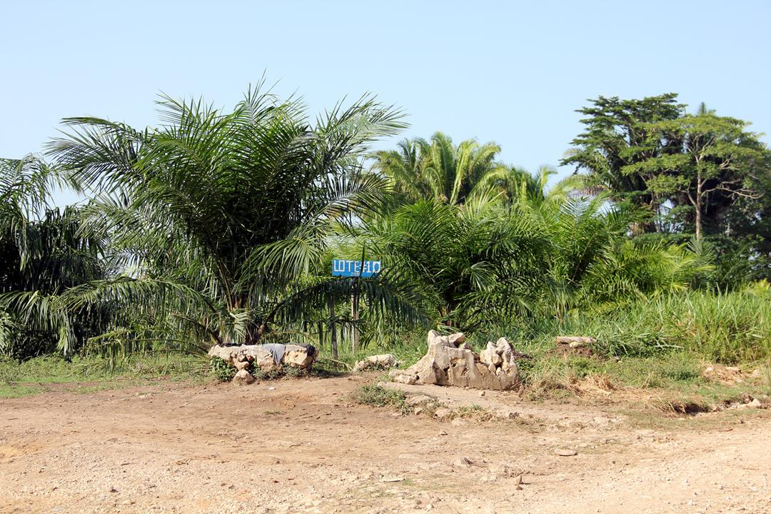 Un rotulo anuncia un lote de palma africana en terrenos de Otoniel Turcios Marroquín.